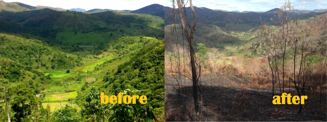 Before and after the fires